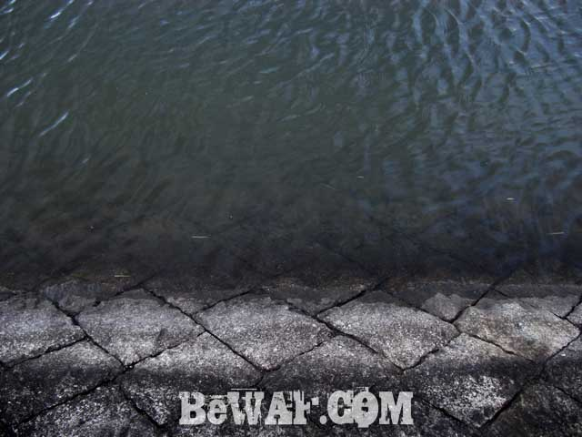biwako-bass-okappari-chouka-3