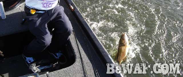 biwako basss fishing guide yasui nedan ninki 17
