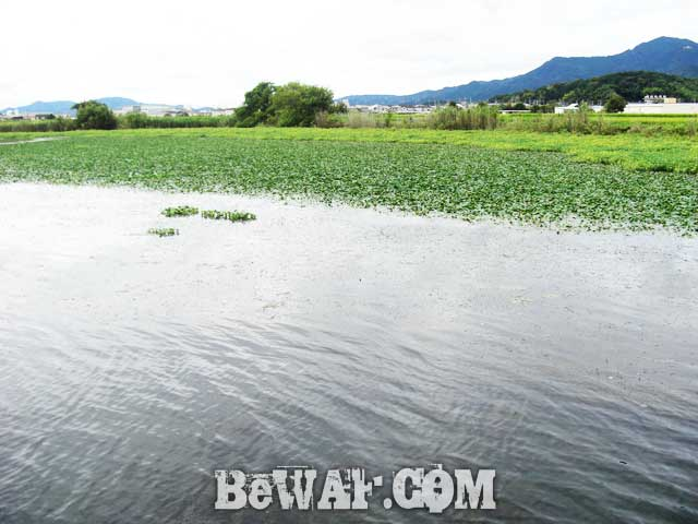 biwako basss fishing guide yasui nedan ninki 8