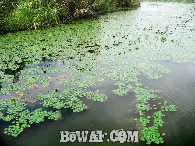biwako guide yasui san bass fishing bunbun 7