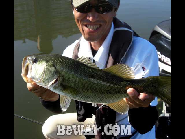 biwako guide yasui umai black bass blog 13
