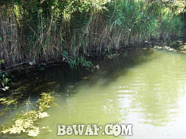 biwako guide yasui umai black bass blog 14