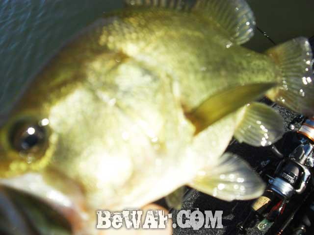 biwako guide yasui umai black bass blog 19