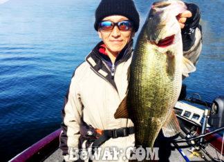 お客様からの釣果:関原様~琵琶湖で70本 最大55cm!! (2016年)