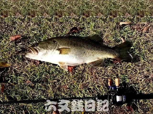 setagawa-bass-chouka-shousai