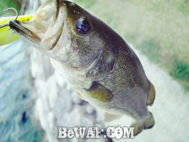 setagawa bass chouka shousai 6
