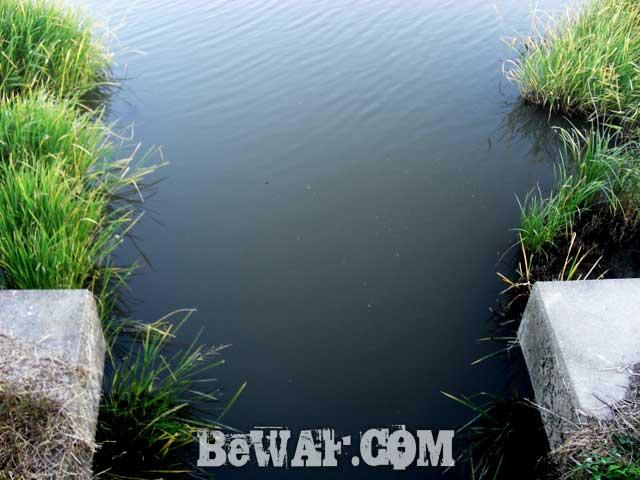 setagawa-bass-chouka-shousai-ninki-7