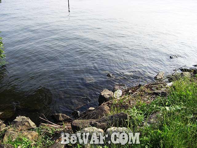 6月23日 琵琶湖おかっぱりへ 志那 葉山川 河口 写真