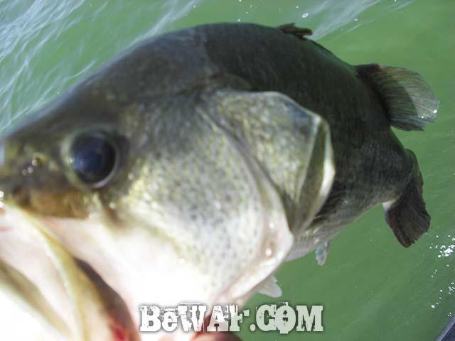 琵琶湖 O.S.P クランクベイト 釣果 ガイド 写真