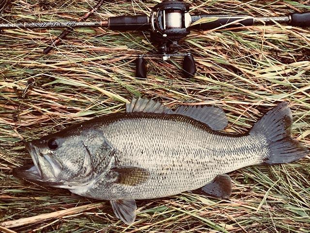 瀬田川 秋の釣り 釣果写真