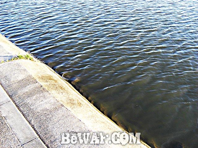 琵琶湖おかっぱり釣果 詳細 写真