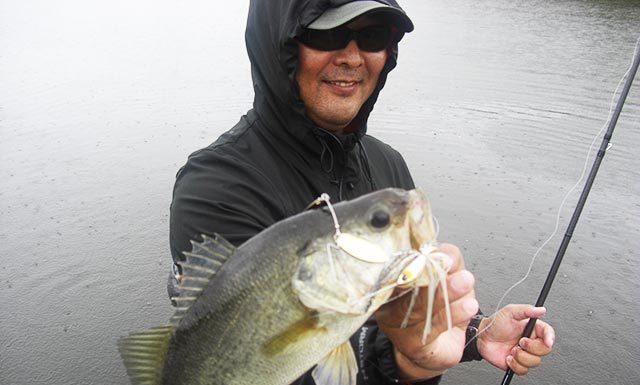 琵琶湖 秋のスピナーベイト 釣果 写真