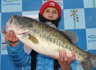 tweet釣果:北湖でドス〜ン!! 60cm!! (琵琶湖)