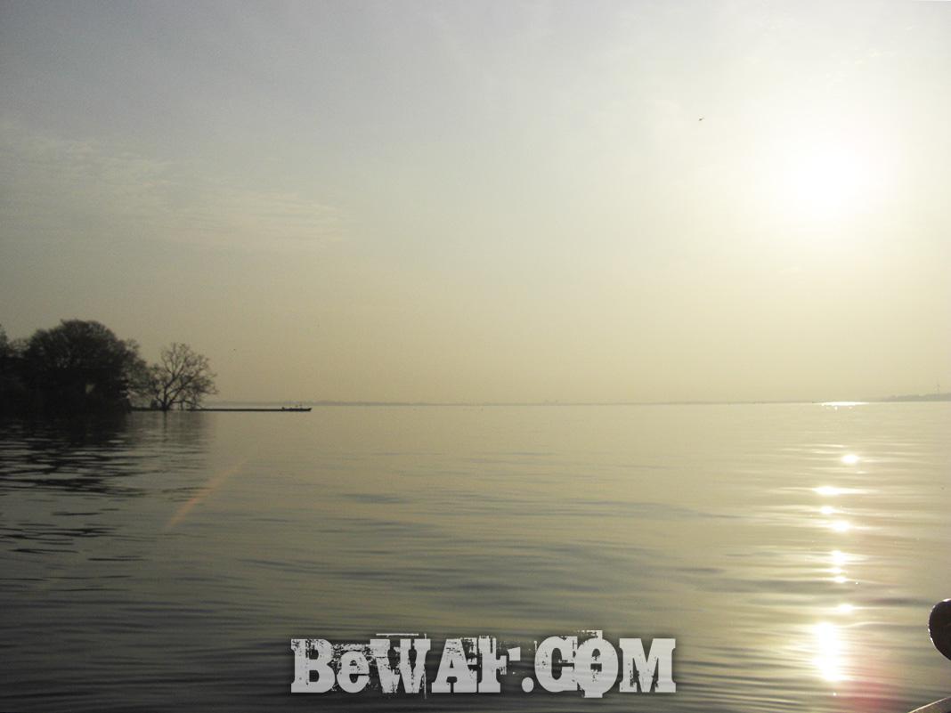 琵琶湖 ガイドプラクティス 3月春 調査 写真