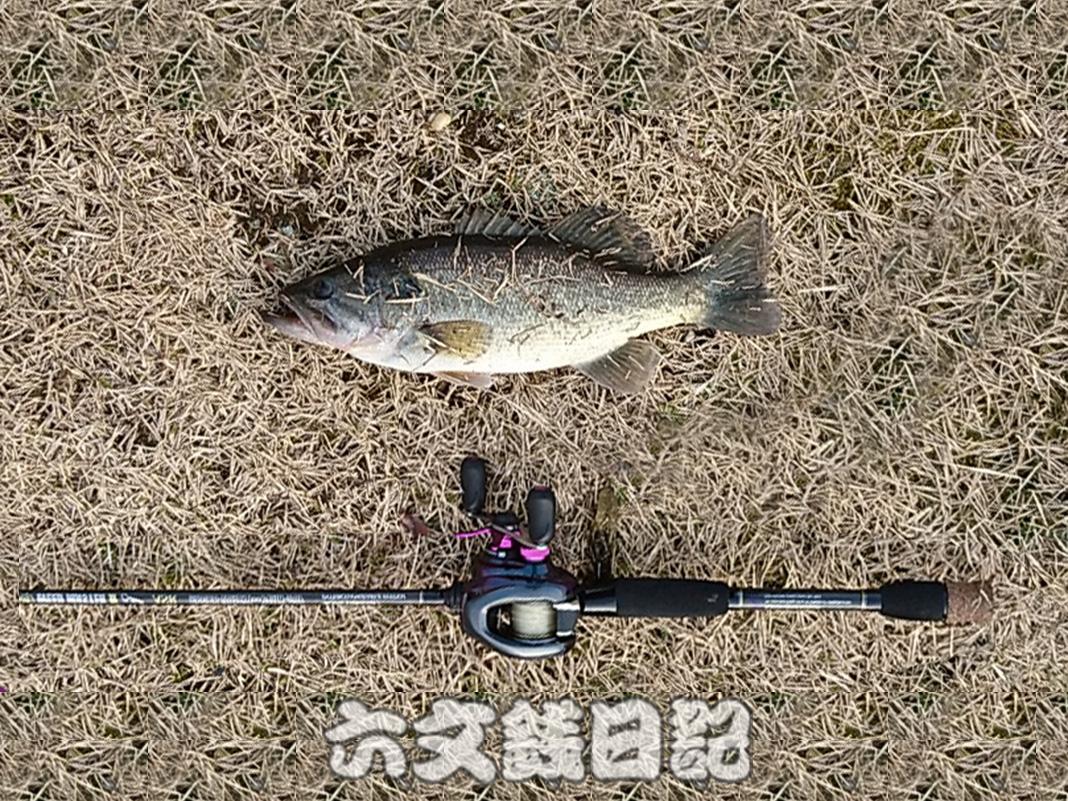 六文銭日記 釣果 2018 45cm 写真