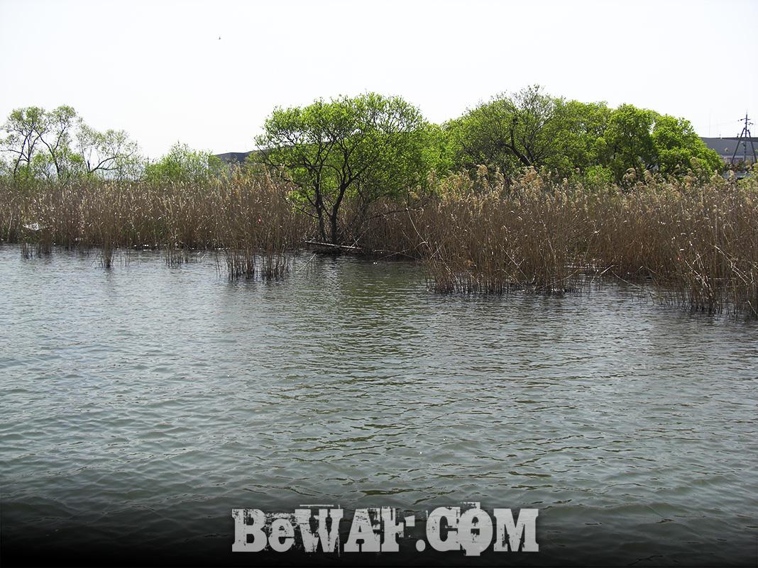 琵琶湖釣行 4月10日 写真