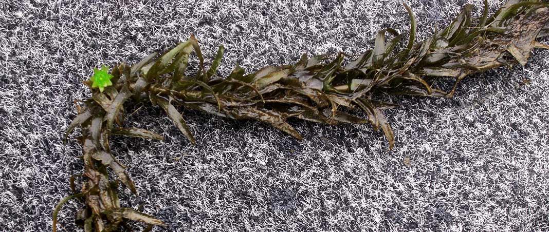 琵琶湖 湖上調査 4月11日 写真