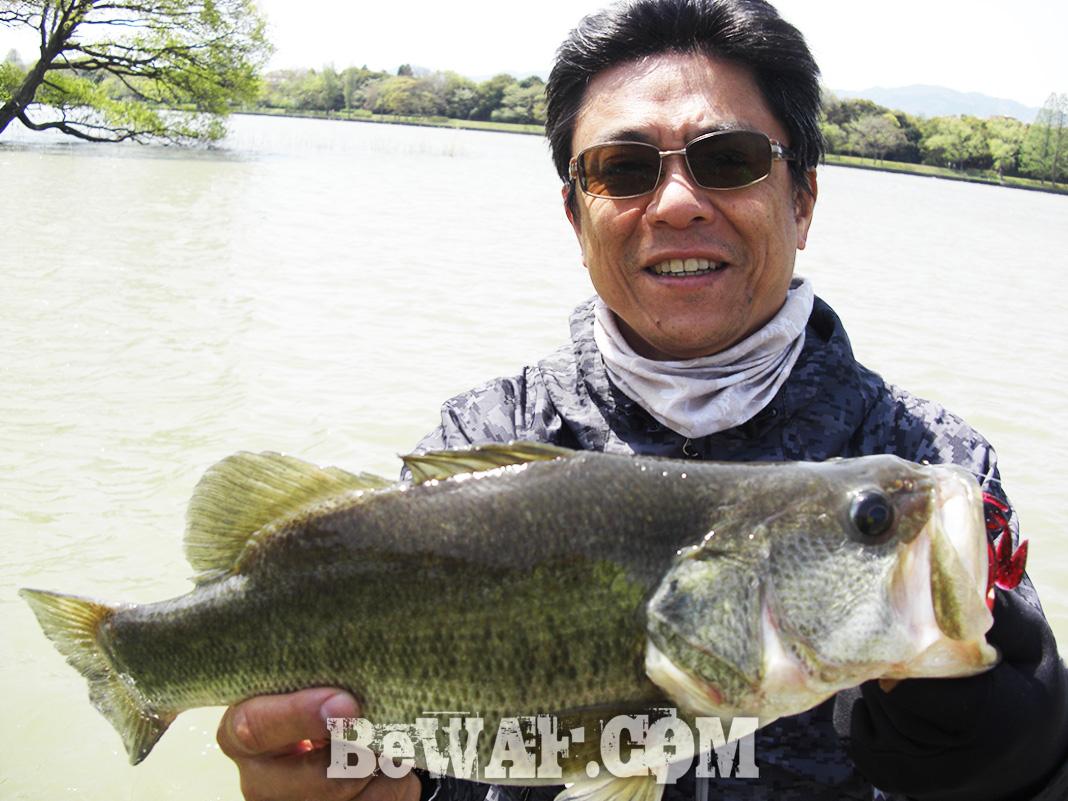 琵琶湖ガイド日記 4月14日 釣果写真