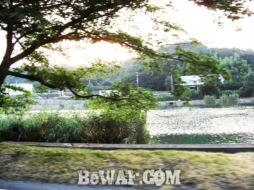 琵琶湖ガイド日記 水中映像写真