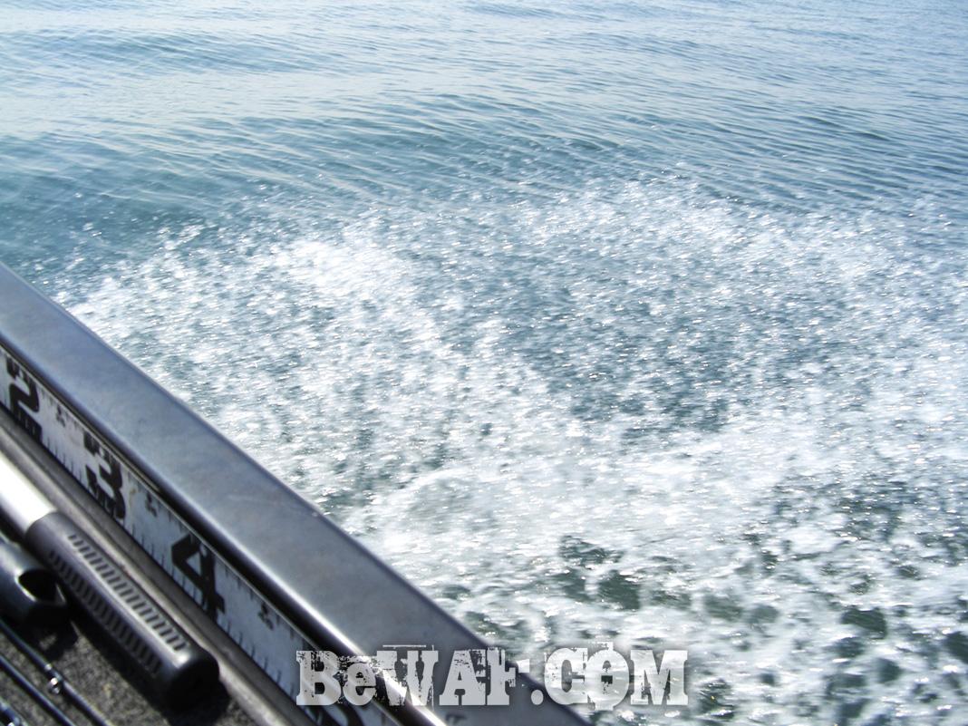 琵琶湖 ガイド日記 チャターベイト写真 釣果
