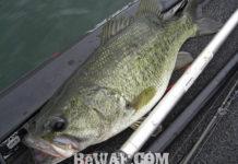琵琶湖北湖 調査 2018 魚探写真