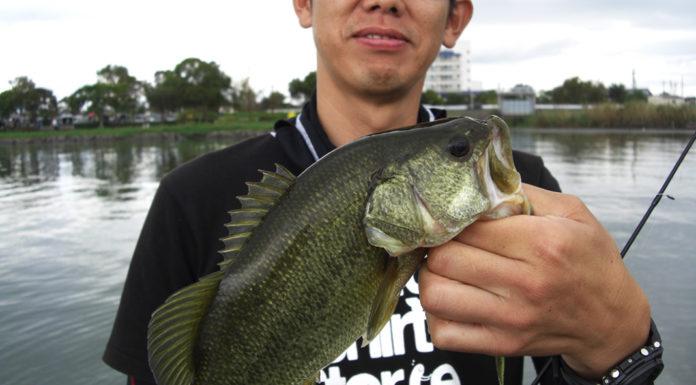 秋の琵琶湖ボート釣行 スピナーベイト写真