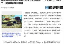 琵琶湖の外来魚に異変 さまざまな憶測写真