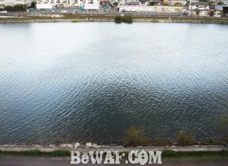 瀬田川へ (10月22日) ギルがプカプカ バスがウロウロ