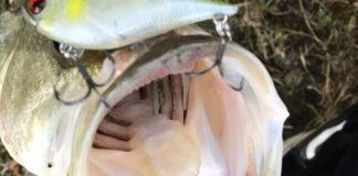 お客様からの釣果 里様~琵琶湖おかっぱり釣果写真
