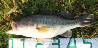 お客様からの釣果提供 琵琶湖ハンドル破損写真