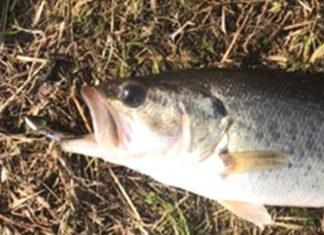 お客様からの釣果:まどやん様~最近の琵琶湖おかっぱり釣果!!
