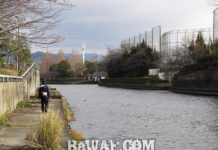 彦根旧港へ釣り 2019 釣果写真