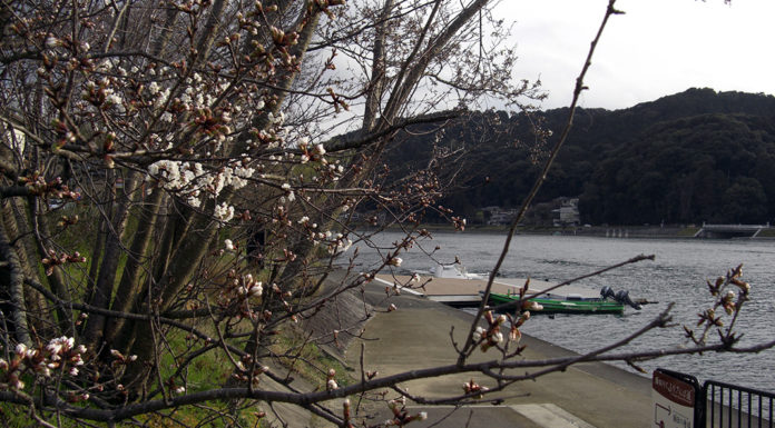 瀬田川春の釣り 釣果情報2019写真