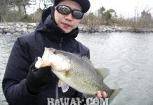 琵琶湖2019年 春の釣果情報 クランクベイト写真