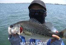 琵琶湖春の釣果 フリーリグ 写真