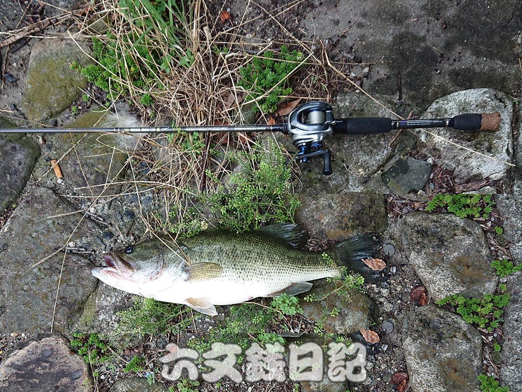 瀬田川釣果 六文銭日記 写真 2019 7月