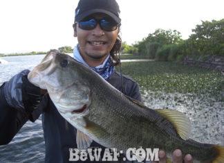 琵琶湖バスフィッシングガイドリポート ~川様~ 51cm