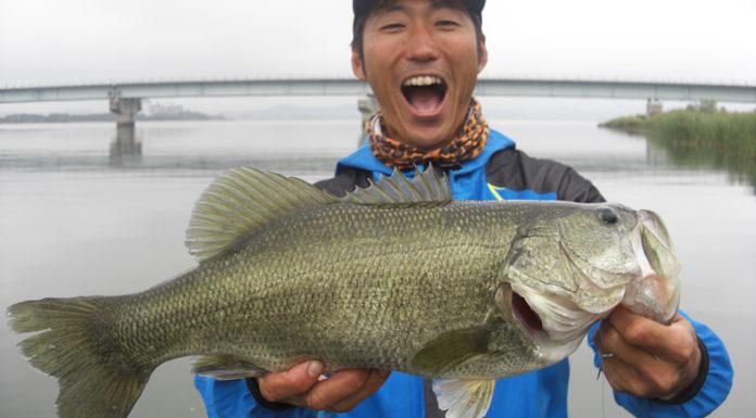 琵琶湖 秋のスピナーベイト釣果2019年 写真