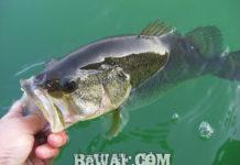 春の琵琶湖釣果調査2020年