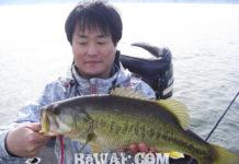 琵琶湖春のガイド2020年 写真