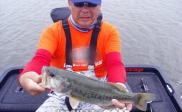 琵琶湖ガイド日記 6月2020年 写真