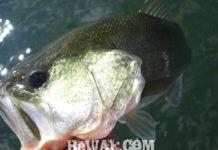 琵琶湖カバースキャット釣果写真